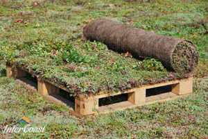 Sempergreen Vegetation Blankets for Green Roofs & Garden Roofs | Division 7 Architectural Products for BC & AB