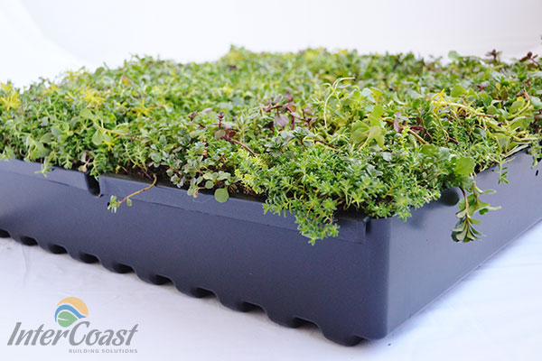 Columbia Green Technologies Green Roof Tray System